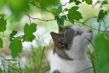 zatrucie kota roślinami